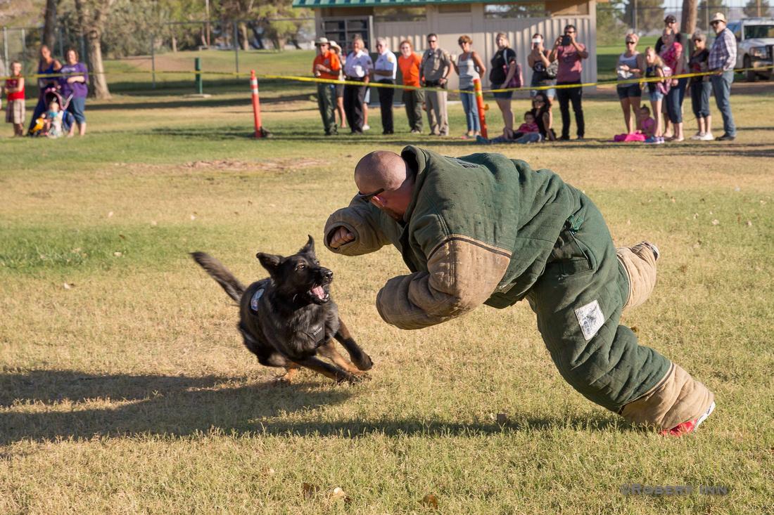 Police Canine Demo-9966