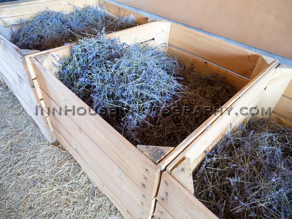 Bins of different varieties of lavender