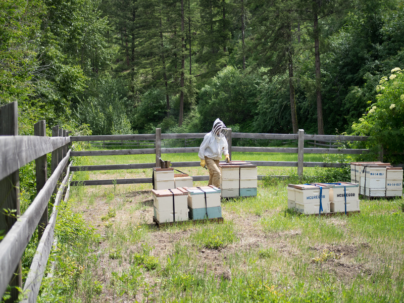Bee Hives-6010005
