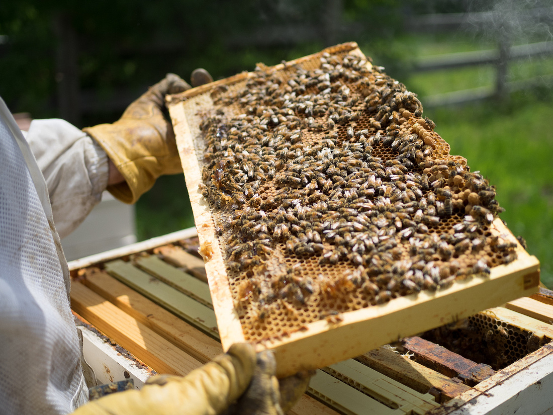 Bee Hives-6010034
