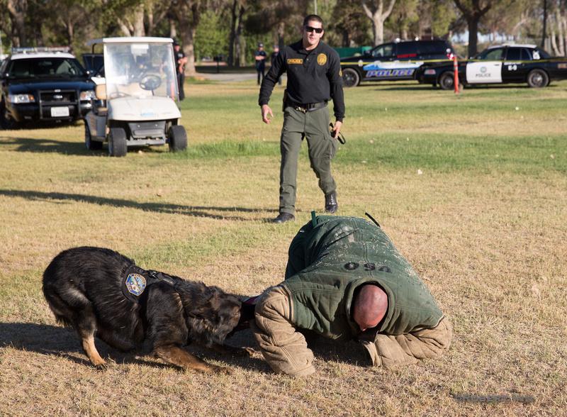 Police Canine Demo-9979